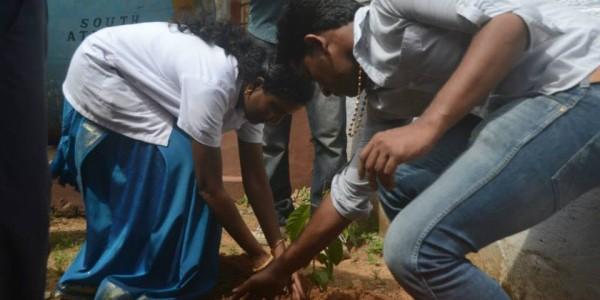 School sapling planting