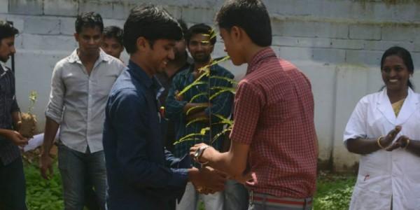 sapling distribution